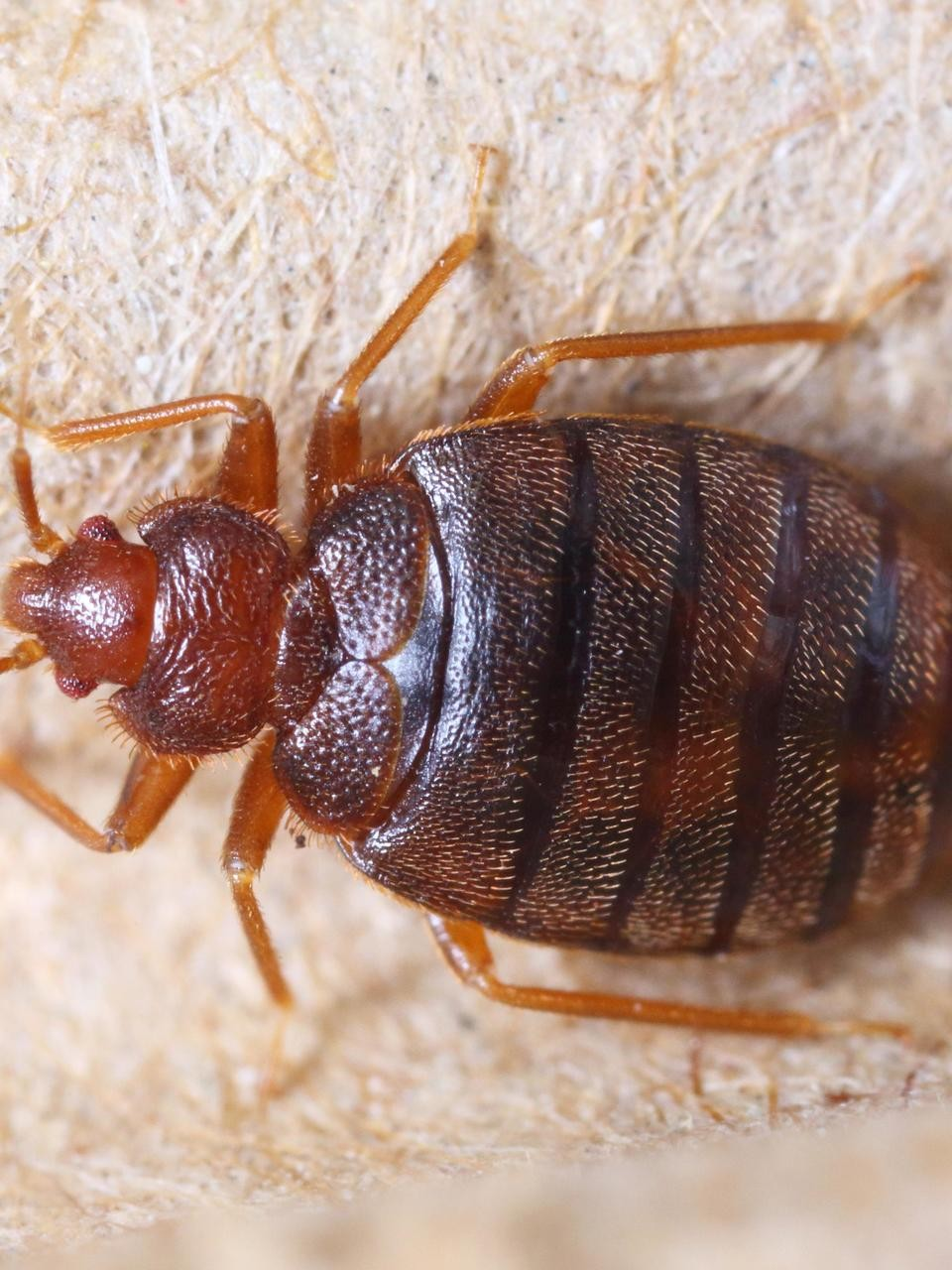 Police Seek Person Who Released Bed Bugs In Walmart Store Wciv