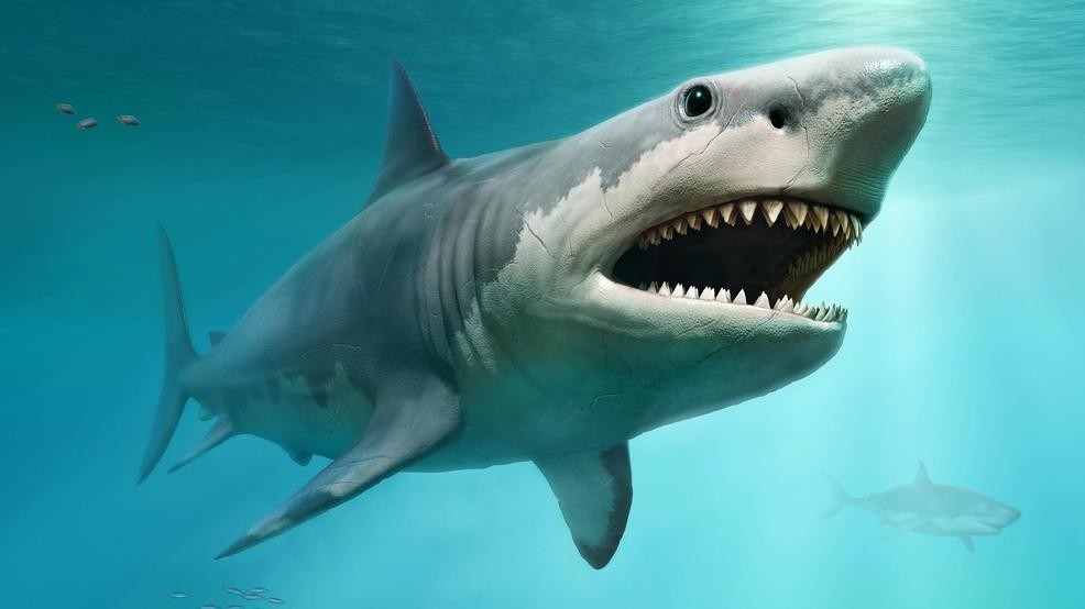 CofC expert talking Megalodon for 'Shark Week' edition of