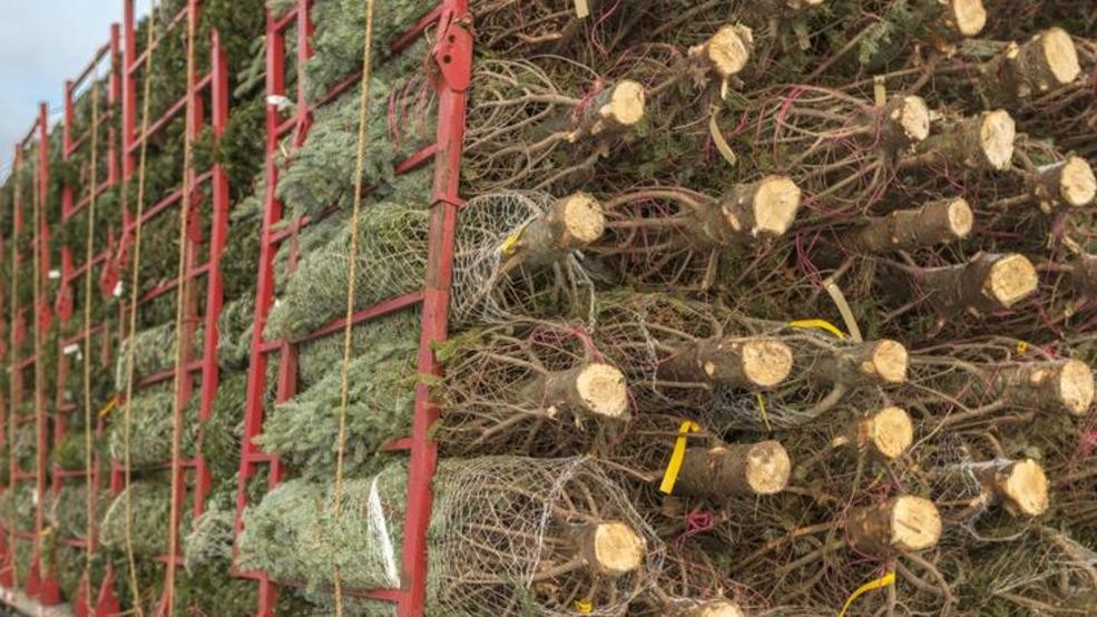 DNR: Donate old Christmas trees, help wildlife | WCIV